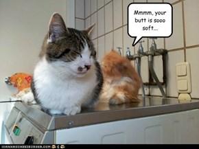 Wash 'n Wear Cats