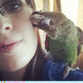 Bird Boop