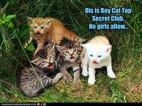 Dis is Boy Cat Top Secret Club.  No girls allow...