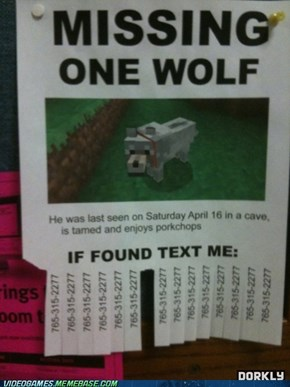 I've lost my wolf!