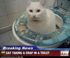 Breaking News - CAT TAKING A CRAP IN A TOILET