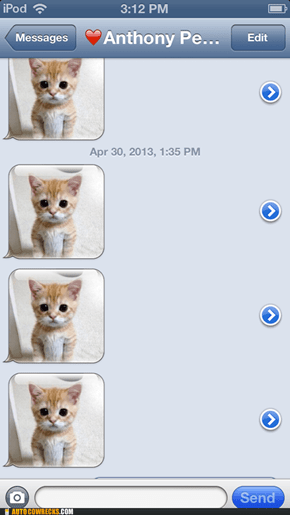 So I was Spammed with cats