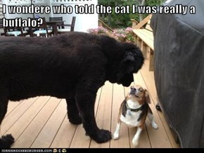 I wondere who told the cat I was really a buffalo?