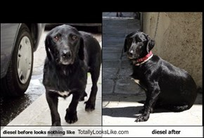 diesel before looks nothing like Totally Looks Like diesel after