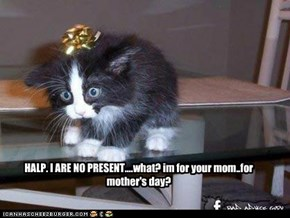 Mother's day kitten confusion