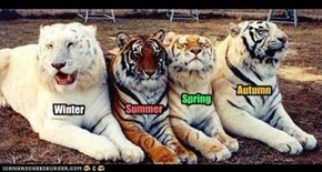 Ligers for every season, for every taste