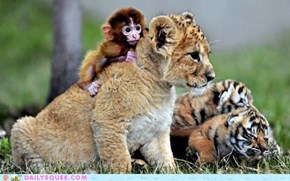 Monkey mingles