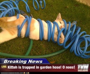 Breaking News - Kitteh is trapped in garden hose! O noes!