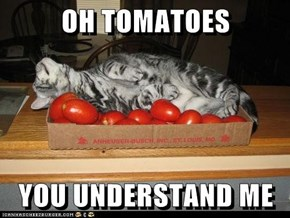 OH TOMATOES  YOU UNDERSTAND ME