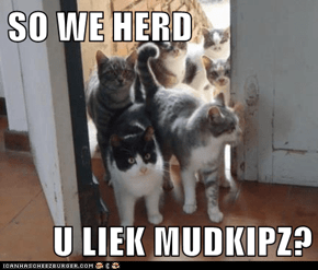 SO WE HERD  U LIEK MUDKIPZ?