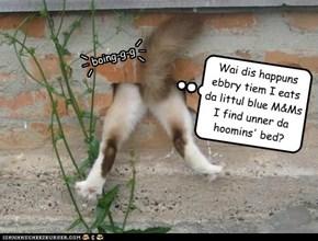 Umm... Kitty... Those AREN'T M&Ms.