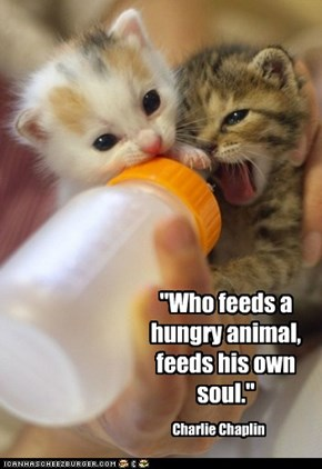 """Who feeds a hungry animal, feeds his own soul."""