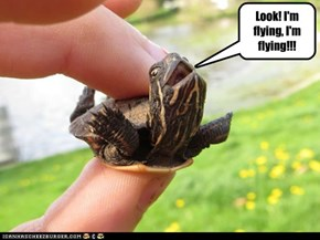 Look! I'm flying, I'm flying!!!