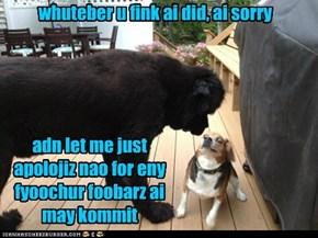 alfa dog instills feer
