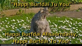 """Happi Burfdai Tu You""  Happi Burfdai Alisaorrdaisy, Happi Burfdai Tu You!"