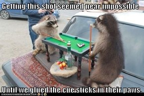 Getting this shot seemed near impossible  Until we glued the cue sticks in their paws.