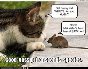 Good gossip transcends species.