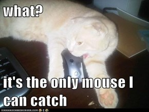 what?  it's the only mouse I can catch