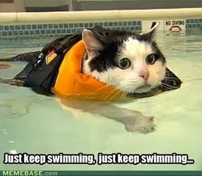 Take Swimming Lessons They Said