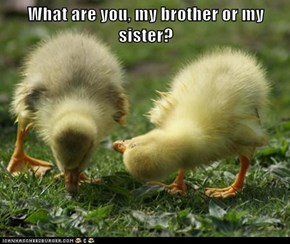 What are you, my brother or my sister?