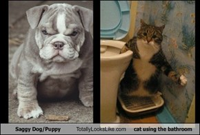 Saggy Dog/Puppy Totally Looks Like cat using the bathroom