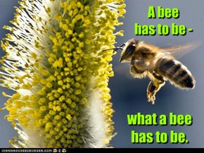 A bee  has to be -