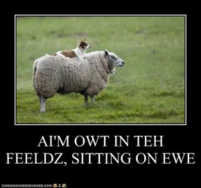 AI'M OWT IN TEH FEELDZ, SITTING ON EWE