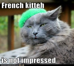 French kitteh   is not impressed
