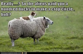 Really.....? So the aliens paid you a hundred bucks to make a crop circle , huh?