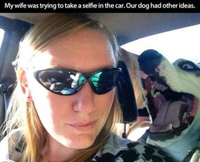 Dog Photobomb