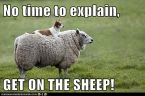 No time to explain,  GET ON THE SHEEP!