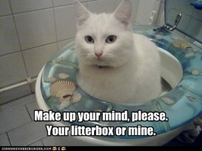 Make up your mind, please. Your litterbox or mine.