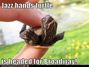 Jazz hands turtle  is headed for Broadway!