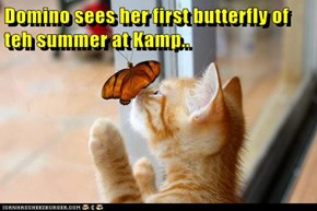 Domino sees her first butterfly of teh summer at Kamp..