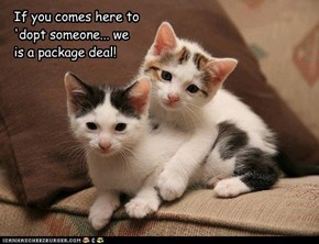 If you comes here to  'dopt someone... we  is a package deal!