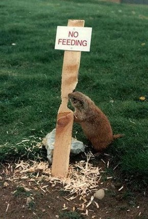 You really shouldn't feed them!