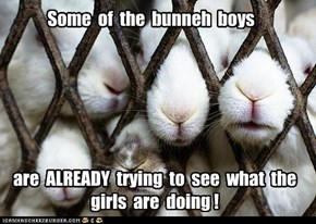 BooBoo's Bunnehs at Kamp: well, they ARE bunnehs...