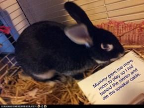 Bunny Shame
