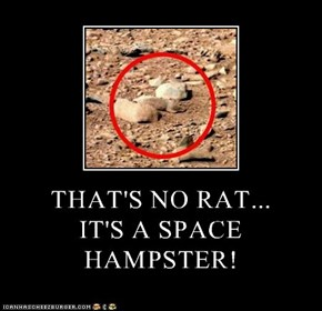 THAT'S NO RAT... IT'S A SPACE HAMPSTER!