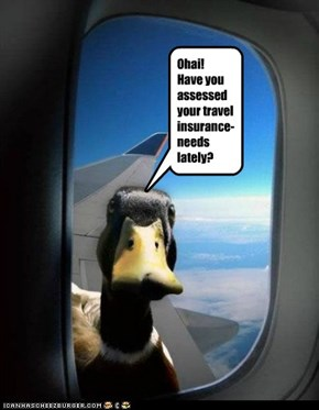Ohai! Have you assessed your travel insurance-needs lately?