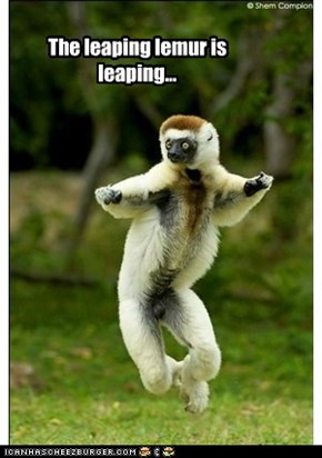The leaping lemur is leaping...