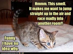 Unanswerable Cat-Question #83.