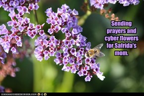 Sending prayers and cyber flowers for Safrida's mom.