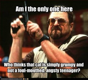 You Keep Using Grumpy Cat.  I Don't Think That Cat Gives That Much Of A S***.