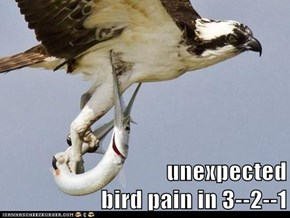 unexpected                                                                bird pain in 3--2--1