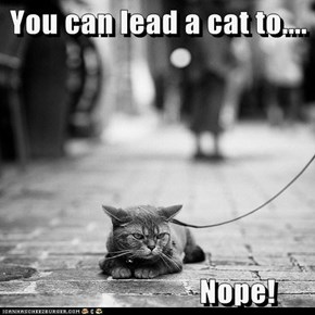 You can lead a cat to....                            Nope!