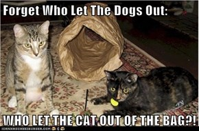 Forget Who Let The Dogs Out:  WHO LET THE CAT OUT OF THE BAG?!