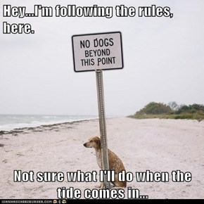 Hey...I'm following the rules, here.  Not sure what I'll do when the tide comes in...