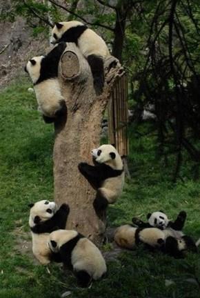 Panda Palooza