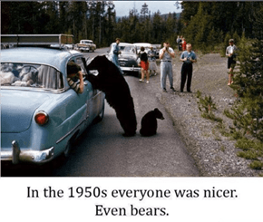 Over the Years Bears Got Sick of Our Crap